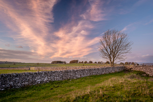Stone walls and fields at sunset in autumn, Sheldon, Peak District National Park, Derbyshire, Englanの写真素材 [FYI03795114]