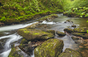 The East Lyn River flowing through ancient woodland at Watersmeet, near Lynmouth, in Exmoor Nationalの写真素材 [FYI03795142]