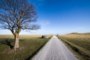 Tree above Malham, Yorkshire Dales, Yorkshire, England, United Kingdom, Europeの写真素材 [FYI03795329]