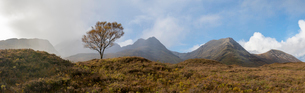 A lone tree and the Cuillins on The Isle of Skye, Inner Hebrides, Scottish Highlands, Scotland, Unitの写真素材 [FYI03795772]