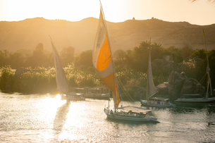 Traditional Felucca sailboats with wooden masts and cotton sails on the River Nile, Aswan, Egypt, Noの写真素材 [FYI03795825]
