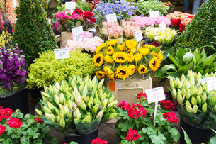 Flowers for sale in the Bloemenmarkt (flower market), Amsterdam, North Holland, The Netherlands, Eurの写真素材 [FYI03795852]