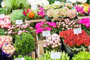 Flowers for sale in the Bloemenmarkt (flower market), Amsterdam, North Holland, The Netherlands, Eurの写真素材 [FYI03795853]