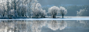 Loch Ard partially frozen over and a hoar frost around Aberfoyle in the Loch Lomond and the Trossachの写真素材 [FYI03795894]