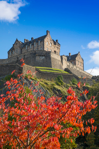 Autumn foliage and Edinburgh Castle, West Princes Street Gardens, Edinburgh, Scotland, United Kingdoの写真素材 [FYI03795944]