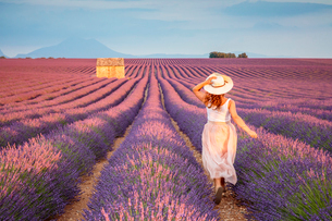 Woman with hat running in lavender fields, Plateau de Valensole, Alpes-de-Haute-Provence, Provence-Aの写真素材 [FYI03796460]