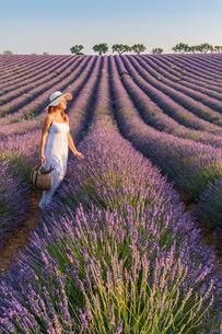 Woman with hat in lavender fields, Plateau de Valensole, Alpes-de-Haute-Provence, Provence-Alpes-Cotの写真素材 [FYI03796461]