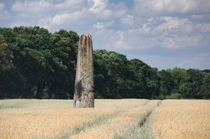The Devils Arrows, a series of Neolithic Standing Stones near Boroughbridge, North Yorkshire, Yorkshの写真素材 [FYI03796641]