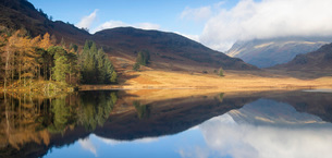 Panoramic Image of autumn colours reflected at Blea Tarn, Langdale Pikes, Lake District National Parの写真素材 [FYI03796664]
