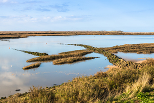 Views as tide comes in, off the NoRF-NEolk Coast Path National Trail near Burnham Overy Staithe, NoRの写真素材 [FYI03796701]