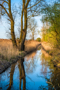 Reed beds reflecting on a waterway in warm evening light at Wicken Fen Nature Reserve in Cambridgeshの写真素材 [FYI03796726]