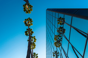Palm trees and glass building, worm's-eye view, Hollywood, Los Angeles, California, United States ofの写真素材 [FYI03797066]