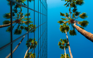 Palm trees and glass building, worm's-eye view, Hollywood, Los Angeles, California, United States ofの写真素材 [FYI03797069]