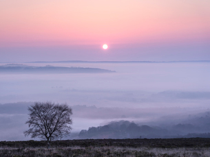 A soft and misty sunrise over Yarner Wood, Dartmoor National Park, Bovey Tracey, Devon, England, Uniの写真素材 [FYI03797250]
