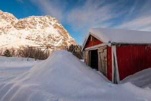 Red fishermans hut partially buried in large snow drift with cod racks and mountain backdrop, Lofoteの写真素材 [FYI03797849]