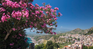 Panoramic view over the town from the Greek Theatre, pink oleander bush in foreground, Taormina, Mesの写真素材 [FYI03797996]