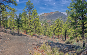 View of Sunset Crater Volcano from the east slope of the Lenox Crater Trail, the dark gray soil is vの写真素材 [FYI03798117]