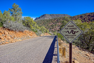 A road leading to Grasshopper Point in Sedona with a warning sign to not run over protected snakes,の写真素材 [FYI03798143]