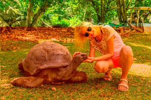 Happy tourist woman touches curious Aldabra Giant Tortoise (Aldabrachelys gigantea) which stretchesの写真素材 [FYI03798312]