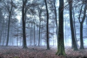Autumnal forest, Rhineland-Palatinate (Rheinland-Pfalz), Germany, Europeの写真素材 [FYI03798523]