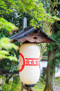 Paper lantern and maples trees, Kyoto, Japan, Asiaの写真素材 [FYI03798730]