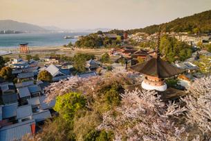 Cherry blossom, Miyajima Island, Hiroshima Prefecture, Honshu, Japan, Asiaの写真素材 [FYI03798742]