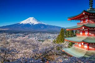 Chureito Pagoda in Arakurayama Sengen Park, and Mount Fuji, 3776m, UNESCO World Heritage Site, Yamanの写真素材 [FYI03798778]