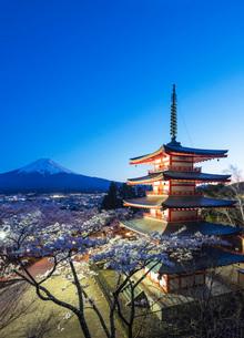 Cherry blossom at Chureito Pagoda in Arakurayama Sengen Park, and Mount Fuji, 3776m, UNESCO World Heの写真素材 [FYI03798779]