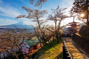Chureito Pagoda in Arakurayama Sengen Park, Fujiyoshida, Yamanashi Prefecture, Honshu, Japan, Asiaの写真素材 [FYI03798782]
