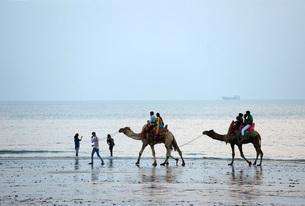Diwali holidaymakers taking camel rides along the shore at sunset, Mandvi, Gujarat, India, Asiaの写真素材 [FYI03799137]
