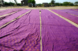 Bolts of brightly coloured dyed and block printed cotton laid out to dry in the sun, Gujarat, India,の写真素材 [FYI03799141]