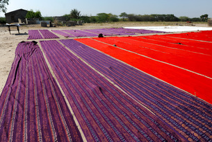 Bolts of brightly coloured dyed and block printed cotton laid out to dry in the sun, Gujarat, India,の写真素材 [FYI03799144]