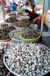 Fresh clams for sale in fish market, Ha Tien, Vietnam, Indochina, Southeast Asia, Asiaの写真素材 [FYI03799192]