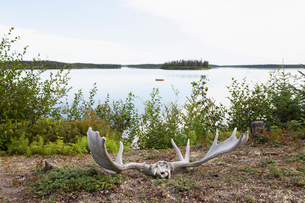 Moose antlers, shed after the rutting season, by the shore of Egenolf Lake in Manitoba, Canada, Nortの写真素材 [FYI03799247]