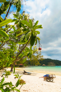 Beautiful white sand beach on this popular holiday island, Koh Rong Sanloem Island, Sihanoukville, Cの写真素材 [FYI03799327]