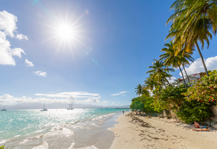 La Datcha Beach, Pointe-a-Pitre, Guadeloupe, French Antilles, West Indies, Caribbean, Central Americの写真素材 [FYI03799440]