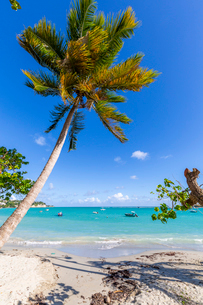 La Datcha Beach, Pointe-a-Pitre, Guadeloupe, French Antilles, West Indies, Caribbean, Central Americの写真素材 [FYI03799441]