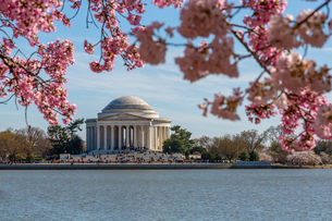 Thomas Jefferson Memorial, Tidal Basin and cherry blossom trees, Washington D.C., United States of Aの写真素材 [FYI03799565]