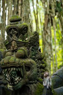 Monkey Forest Sanctuary, Ubud, Bali, Indonesia, Southeast Asia, Asiaの写真素材 [FYI03799830]