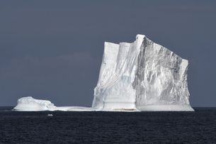 Iceberg with penguins against a blue sky, South Sandwich Islands, Polar Regionsの写真素材 [FYI03799897]