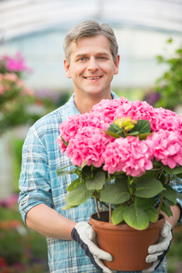 Portrait of happy man holding flower pot in greenhouseの写真素材 [FYI03801322]
