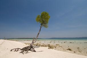 Tranquil beach sceneの写真素材 [FYI03801395]