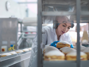 Female baker putting cakes on packaging line in cake factoryの写真素材 [FYI03802687]