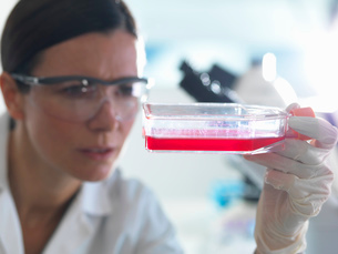 Female cell biologist holding flask containing stem cells, cultivated in red growth mediumの写真素材 [FYI03803049]