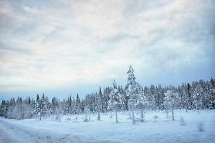 View of roadside and  snow covered trees, Hemavan, Swedenの写真素材 [FYI03803063]
