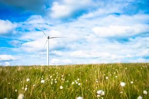 View of wind turbine in field of cotton grass, UKの写真素材 [FYI03803270]