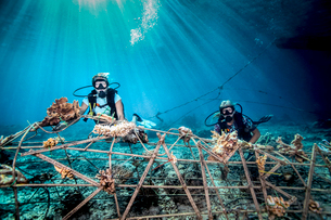 Underwater view of female divers fixing a seacrete on seabed, (artificial steel reef with electric cの写真素材 [FYI03804022]