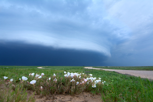 Arcus cloud from storm over rural road and wildflowers, Dalhart, Texas, USAの写真素材 [FYI03804226]