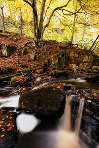 Long exposure of river flowing over rocks in forest, Padley Gorge, Peak District, England, UKの写真素材 [FYI03804313]