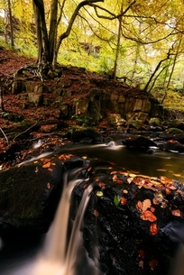 Long exposure of river flowing over rocks in forest, Padley Gorge, Peak District, England, UKの写真素材 [FYI03804315]